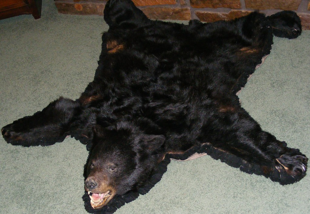 bear skin rug skin rug for cheap flickr 31186