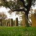 Civiltà megalitache - Necropoli