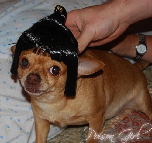 Girl Bangs Dog