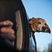 Super Beagle