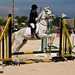 Dressage and Show Jumping - Maghtab-1