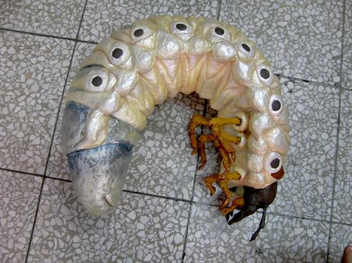 甲蟲幼蟲 Flickr Photo Sharing