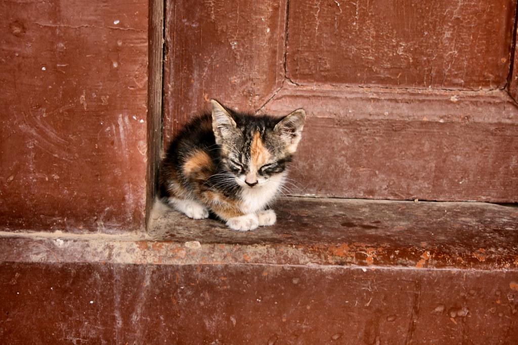 Stray Cats The Boracsat Archive Radoi Blogspot
