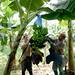 Costa Rica: Rio Frio's Plastic Management