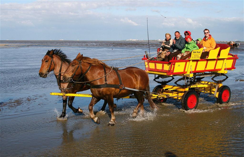 Wattwagen auf dem Weg zur Insel Neuwerk / Horse carriage i