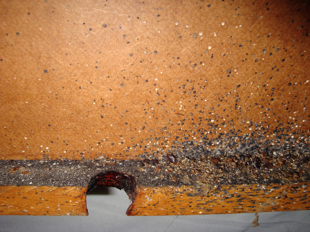 Pictures Of Bed Bug Bites On African Americans