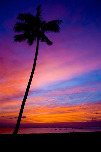 Hawaii Sunset Palm Tree Clich 233 I Finally Got A Chance To