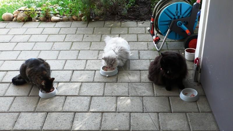 Tabby, Fluffy & Nera