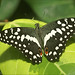 """Butterfly in """"Jardin des Papillons"""" 1"""