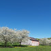 Blossom, Barn & Blue Sky (from May 2008)