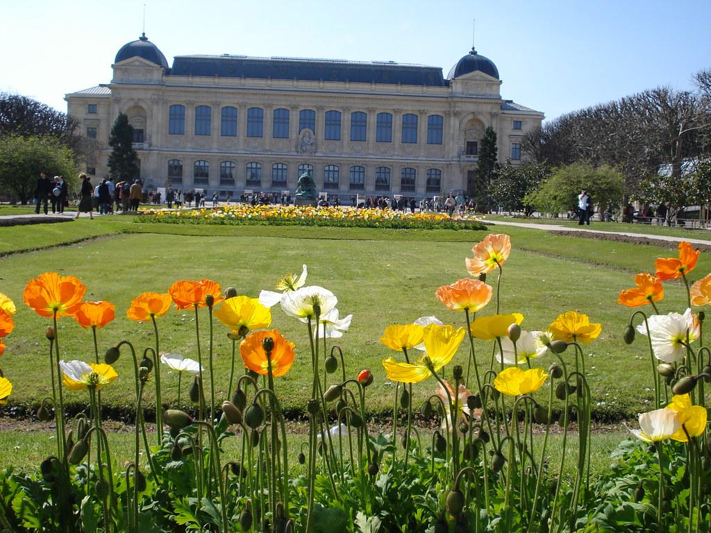 Paris jardin des plantes alain michot for Jardine des plantes