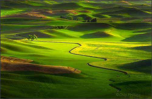 Lone Tree, Palouse Hills | by Chip Phillips