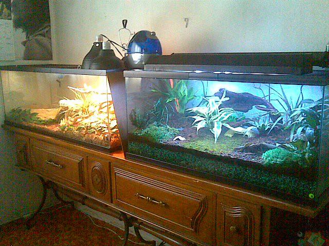 60 gallon tank 001 and 40 gallon living vivarium | On the ...
