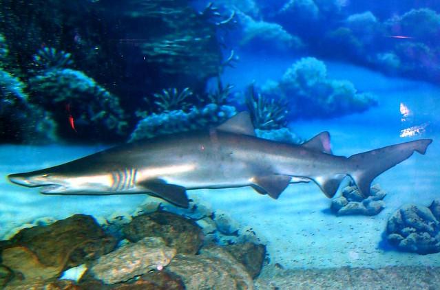 Jenkinsons Aquarium Flickr Photo Sharing