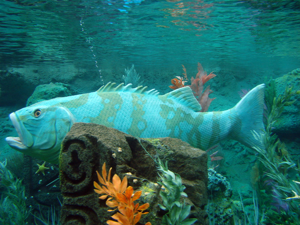 Big Fish | Inside the Finding Nemo Submarine Ride | Gregor ...