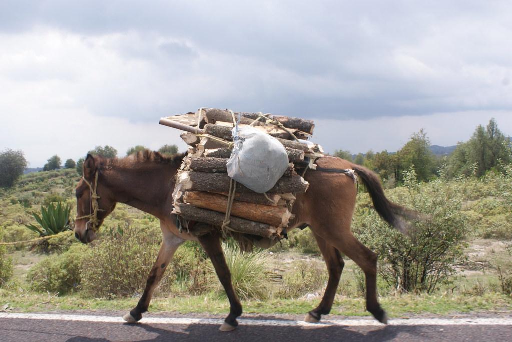 Resultado de imagen para burro de carga