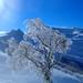 Albero ghiacciato / Frozen tree