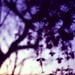 Tree Painting w/ Camera