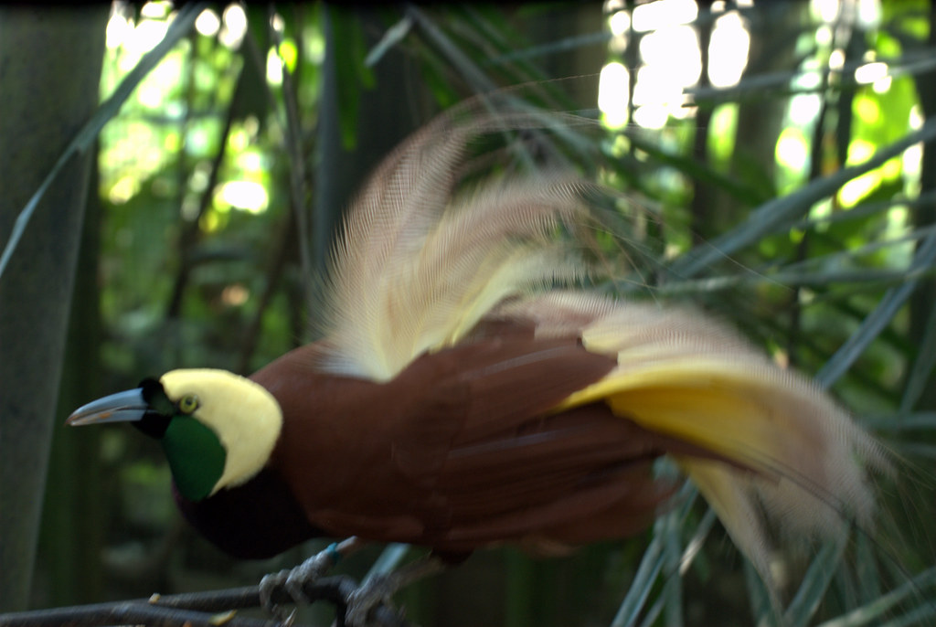 Galapagos: The Endangered Paradise