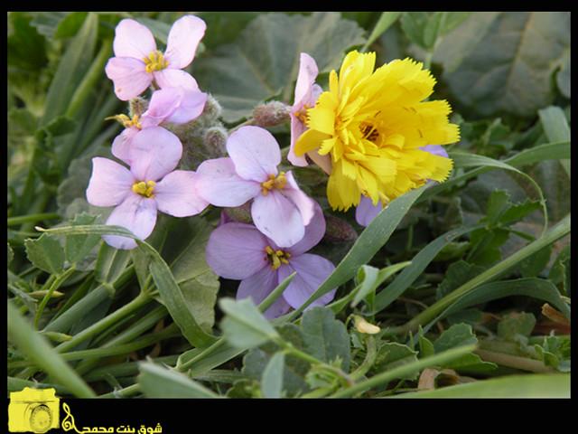 flwor  shoog  flickr, Beautiful flower