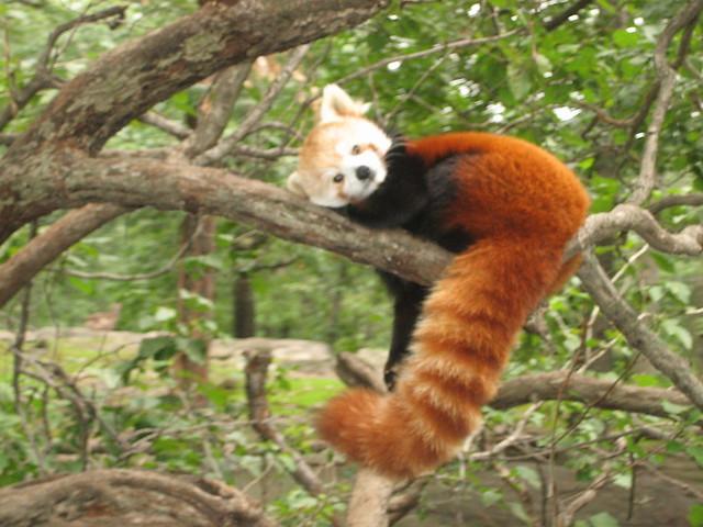 Animal at Bronx Zoo | Flickr - Photo Sharing! Bronx Zoo Animals