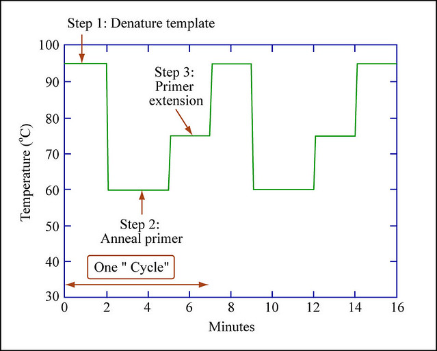 pcr cycles graph showing temperature cycling for a typical\u2026 flickr PCR Southern Blot pcr cycles by mitopencourseware pcr cycles by mitopencourseware