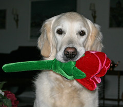 Ditte with her newest toy