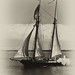 Lynx Schooner Sailboat, image by Mike Baird, Sepia and antique treatment by Howard Ignatius. Howard Ignatius modified my image of the Lynx Schooner howard-made-sepa-of-lynx-schooner