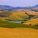Colline Toscane / Tuscan hills (Pisa, Tuscany, Italy)
