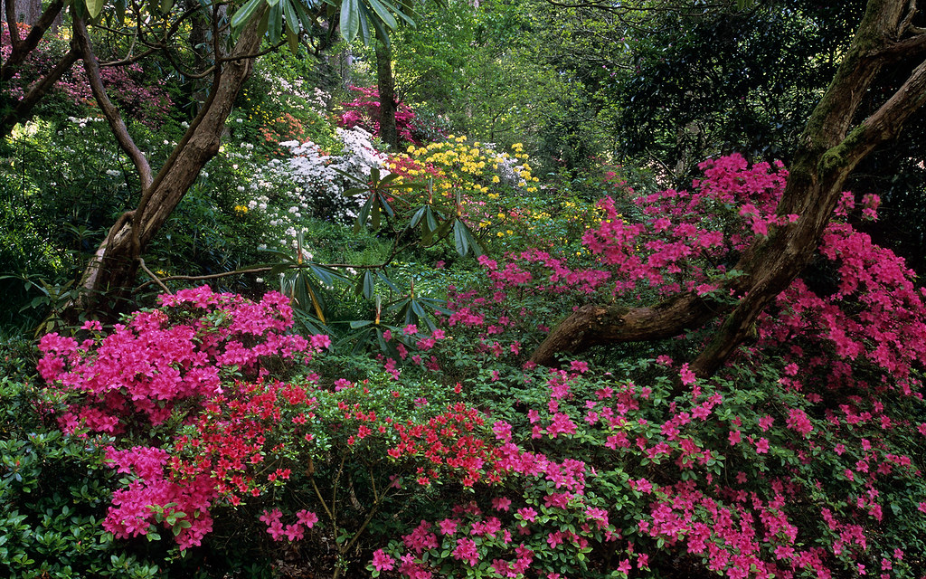 Bodnant Gardens Conwy Wales Uk Forest With Colorful K