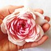Rose in Hand