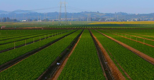 Monterey County agriculture | by Richard Masoner / Cyclelicious