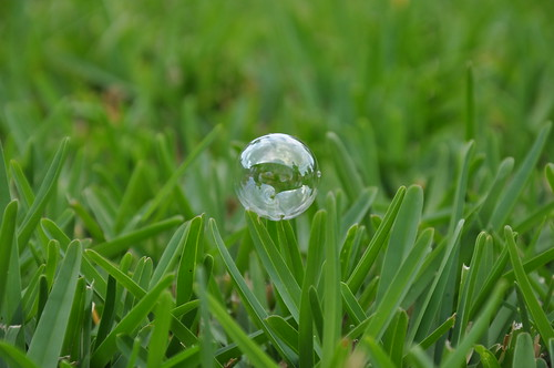 Bubble on St. Augustine grass | by jmorgan90