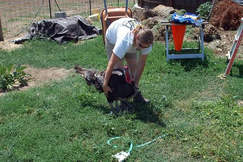 Women Slaughter Chicken flickr