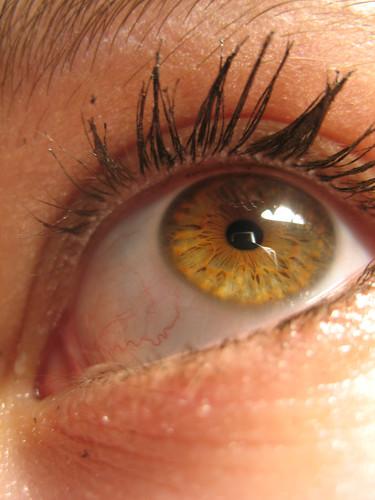 yellow eyes - photo #27