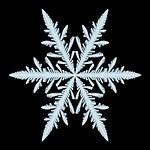 Snowfakes Gallery