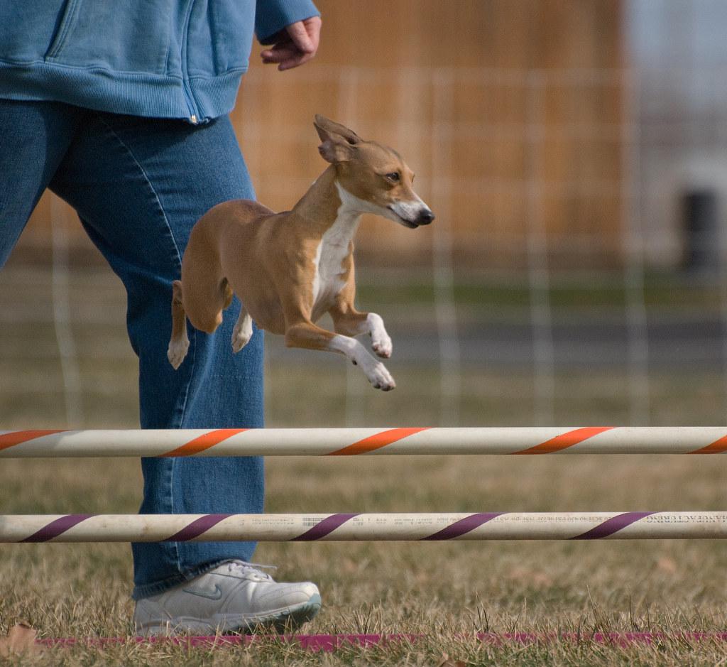 Dog Training Jobs Near Me