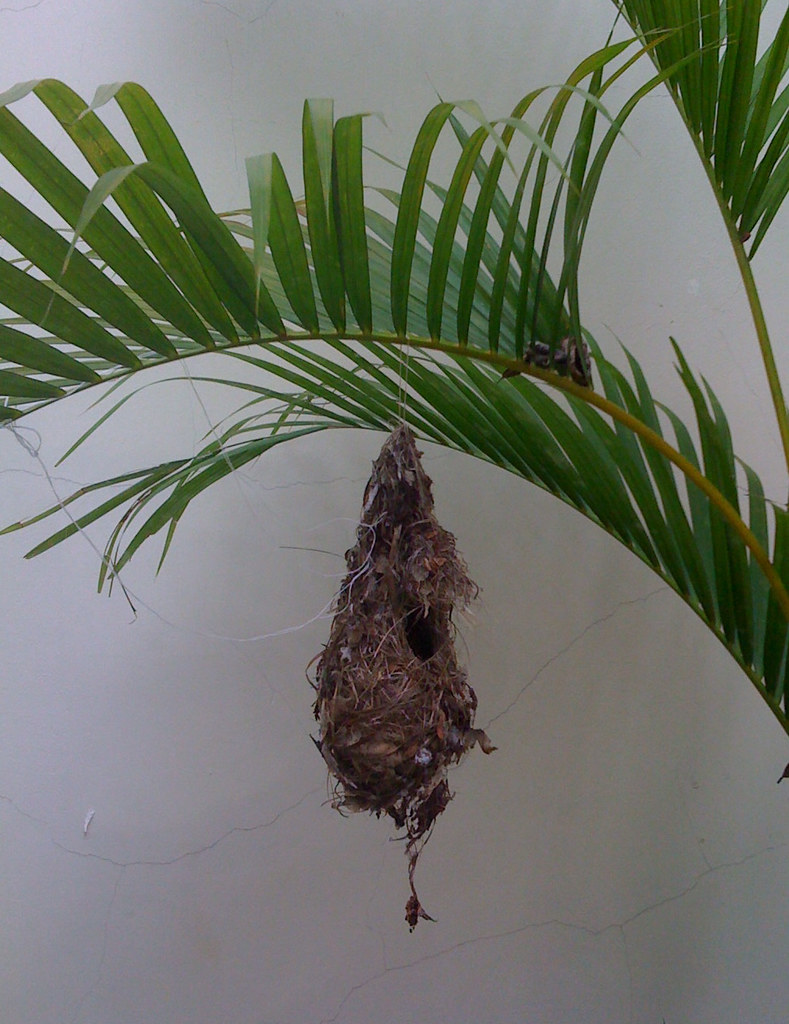 Bird's Nest in my house! | Can anyone identify what type ... Bird Nest With Bird