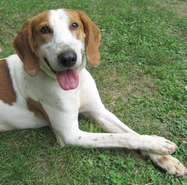 Adopt Older Dog Uk