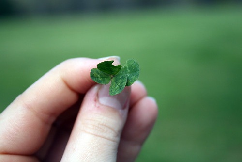 four-leaf clover | by theogeo