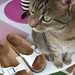 Birkenstocks and Cat