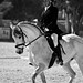Dressage and Show Jumping - Maghtab-3