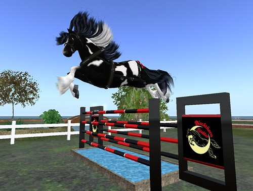 Gypsy Vanner High Jump Jumping My Double Oxer With