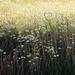 a Field of ...