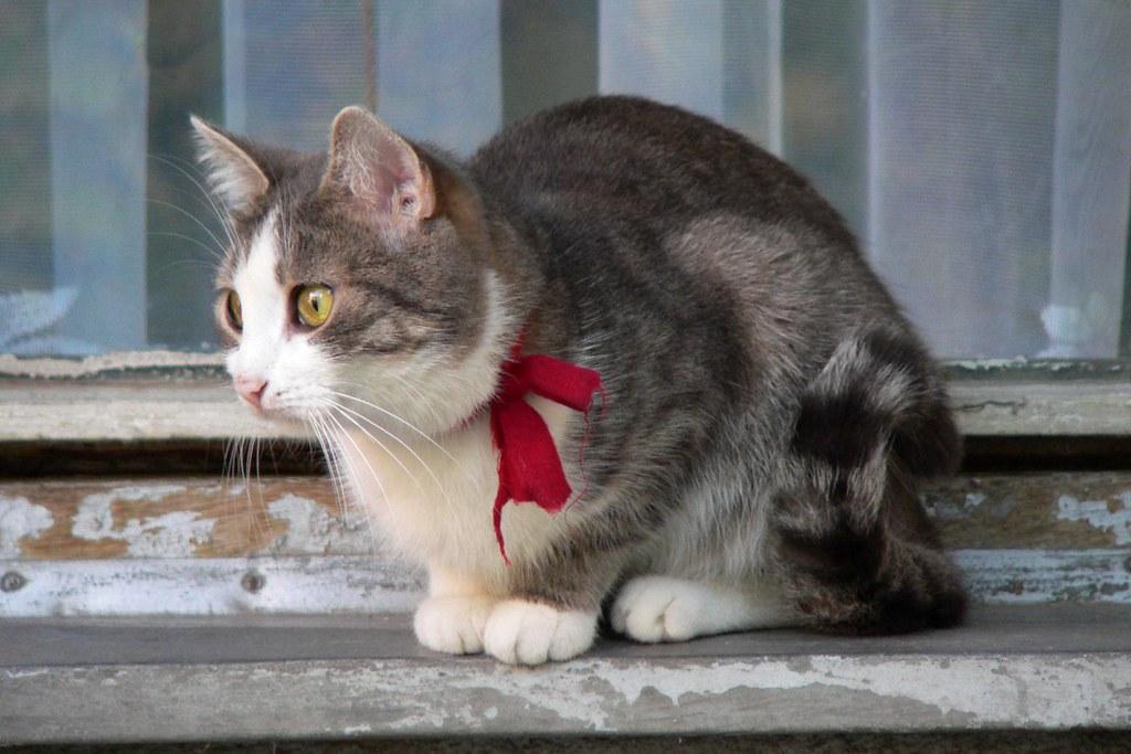 Cat C Spec Sheet