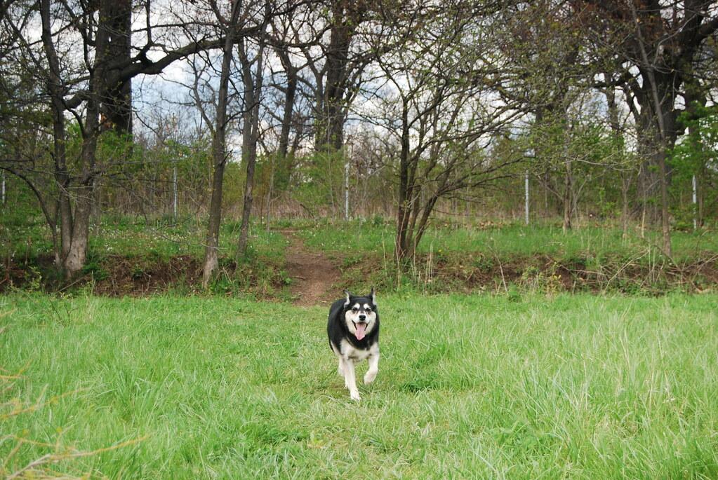 Grove Run Dog Park