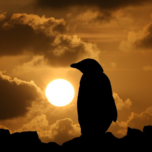 Penguin silhouette | by Heaven`s Gate (John)