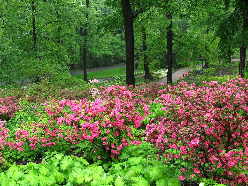 Azalea Garden New York Botanical Garden Designed By Oehme Flickr
