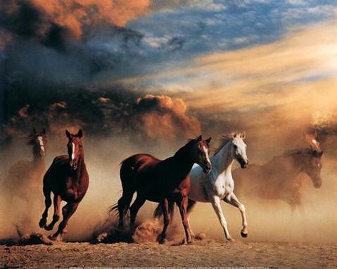 Wild Horses Running Free | horselover16 | Flickr