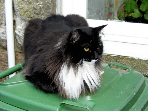 Domestic Long Hair Cat List